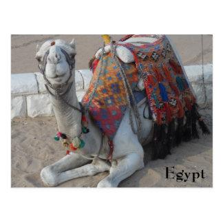 Camello de Egipto Postales