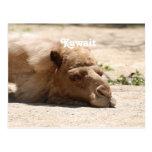 Camello de Kuwait Tarjetas Postales