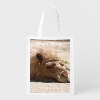 Camello de Kuwait