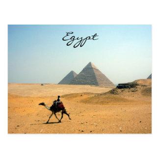 camello de la pirámide tarjeta postal