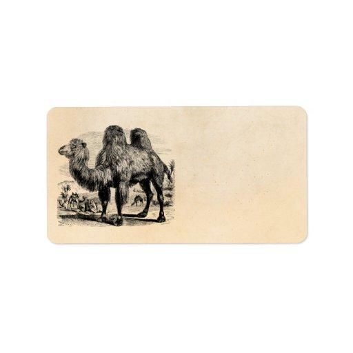 Camello de los 1800s del vintage - plantilla egipc etiqueta de dirección