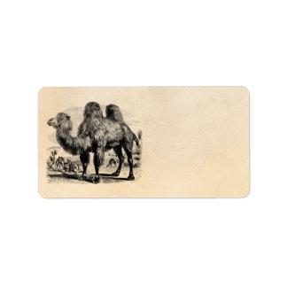 Camello de los 1800s del vintage - plantilla egipc etiquetas de dirección