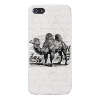 Camello de los 1800s del vintage - plantilla egipc iPhone 5 carcasa