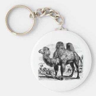 Camello de los 1800s del vintage - plantilla egipc llavero redondo tipo pin