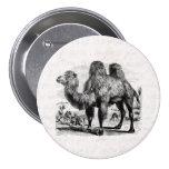 Camello de los 1800s del vintage - plantilla egipc pins