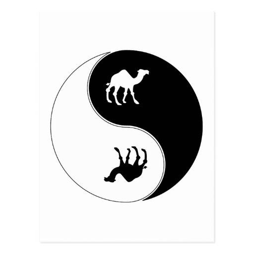 Camello de Yin Yang Tarjeta Postal