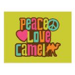 Camello del amor de la paz postales