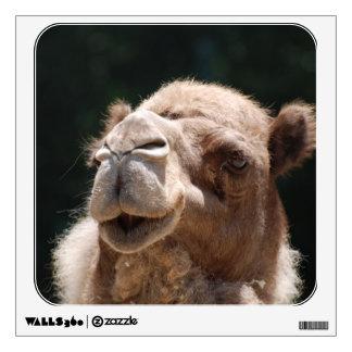Camello del día de chepa