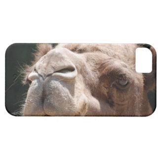 Camello del día de chepa iPhone 5 fundas
