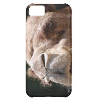 Camello del día de chepa funda para iPhone 5C