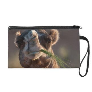 Camello del día de chepa que festeja en hierba