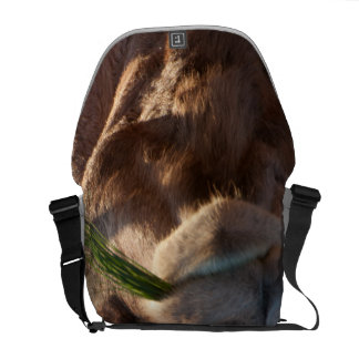 Camello del día de chepa que festeja en hierba bolsa messenger
