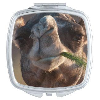 Camello del día de chepa que festeja en hierba espejo para el bolso