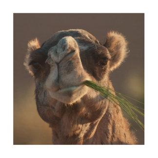 Camello del día de chepa que festeja en hierba impresión en madera