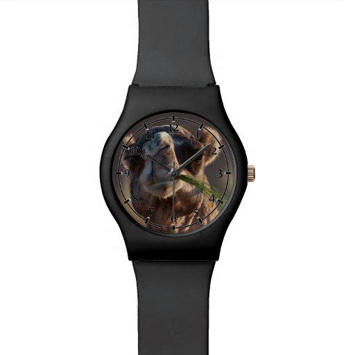 Camello del día de chepa que festeja en hierba reloj