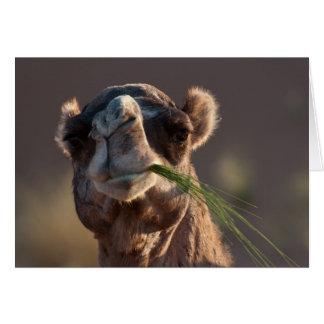 Camello del día de chepa que festeja en hierba tarjeta pequeña