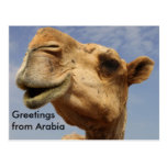Camello del dromedario tarjetas postales
