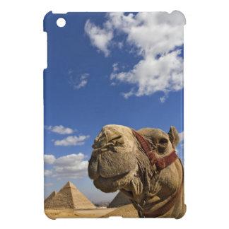 Camello delante de las pirámides de Giza, Egipto,