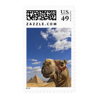 Camello delante de las pirámides de Giza, Egipto, Envio