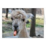 Camello divertido tarjetón