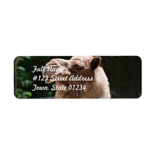 Camello dulce etiqueta de remite