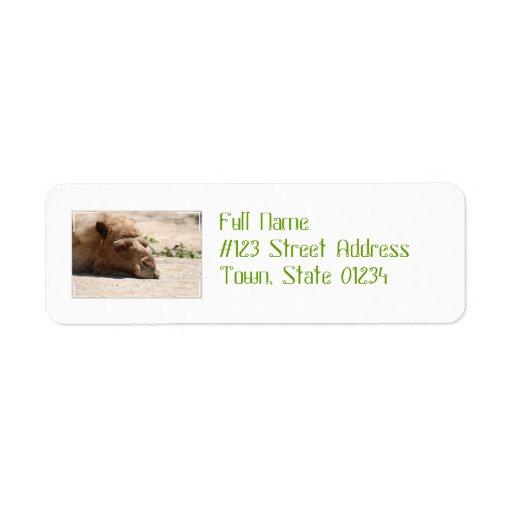 Camello el dormir etiquetas de remite
