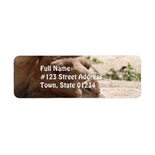 Camello el dormir etiqueta de remite