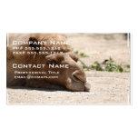 Camello el dormir tarjeta personal