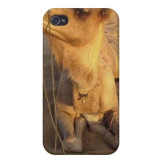 Camello en caso del iPhone 4 del desierto iPhone 4 Fundas