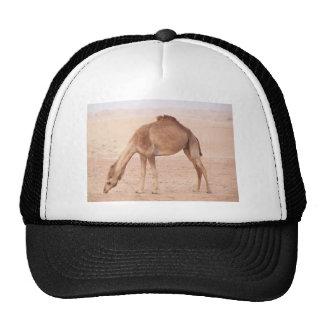 Camello en desierto gorros bordados