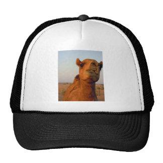 Camello en el desierto 2 gorra
