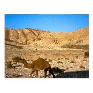 Camello en el desierto de Judean Postal