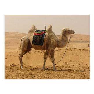 Camello en el desierto tarjeta postal