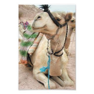 Camello en el poster del desierto fotografía