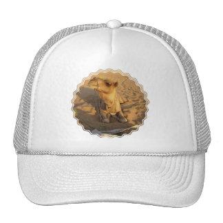 Camello en gorra de béisbol del desierto