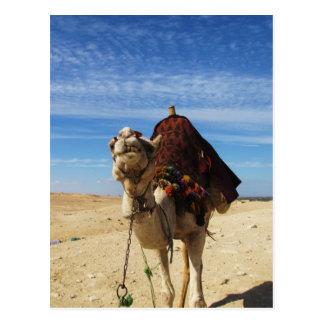 Camello en la fotografía de Egipto Postal
