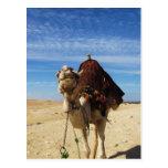 Camello en la fotografía de Egipto Postales