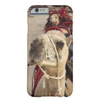 Camello en la playa del cable, Broome Funda De iPhone 6 Barely There