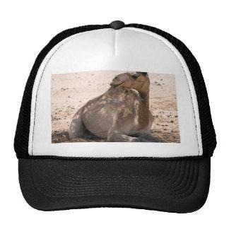 Camello en la sombra gorra