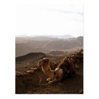 Camello en monte Sinaí Postal