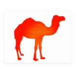 Camello en rojo postal