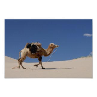 camello fotografía