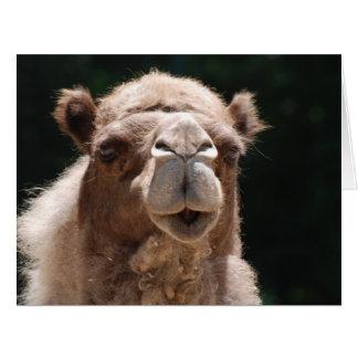 Camello intrépido tarjeta de felicitación grande