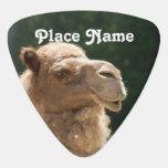 Camello kuwaití
