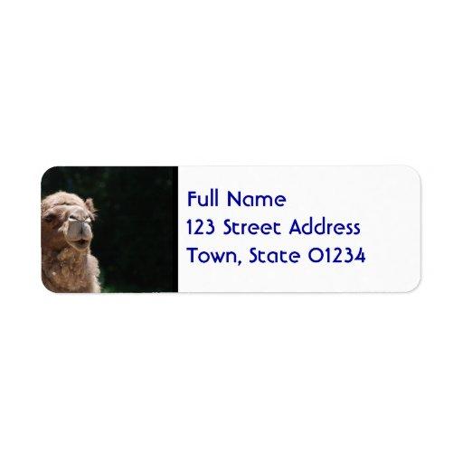 Camello lindo etiquetas de remite