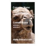 Camello lindo plantillas de tarjeta de negocio