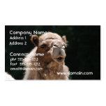 Camello lindo tarjetas personales