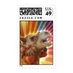 Camello místico franqueo