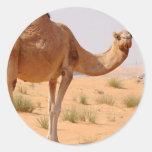 Camello para los pegatinas de los árabes