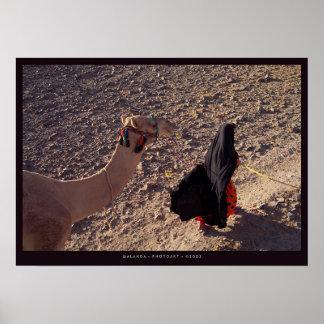 Camello-paseo en Egipto Póster